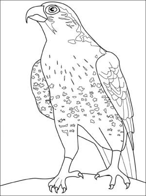 dibujo de halcon para colorear