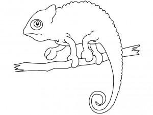 dibujo de una iguana para colorear