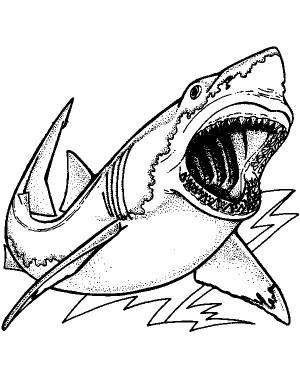 Tiburon Para Colorear Pintar E Imprimir