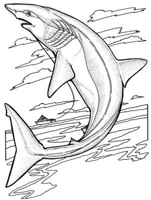 tiburones para pintar