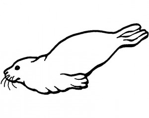 dibujos de focas para pintar