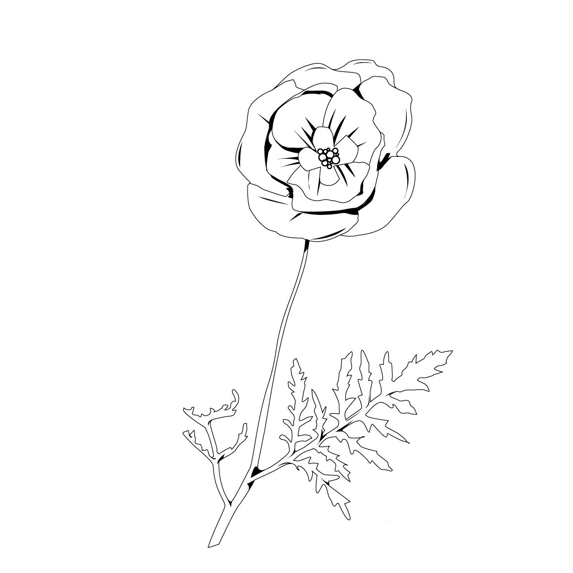 Free coloring pages of cempasuchil flower