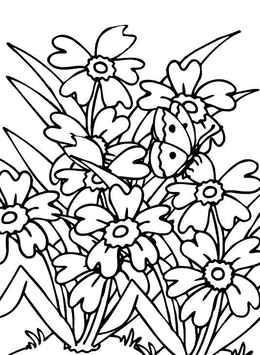 Flores silvestres para colorear for Plantas ornamentales para colorear
