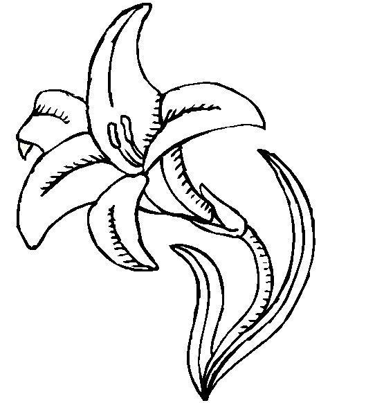 printable coloring pages lily - photo#38