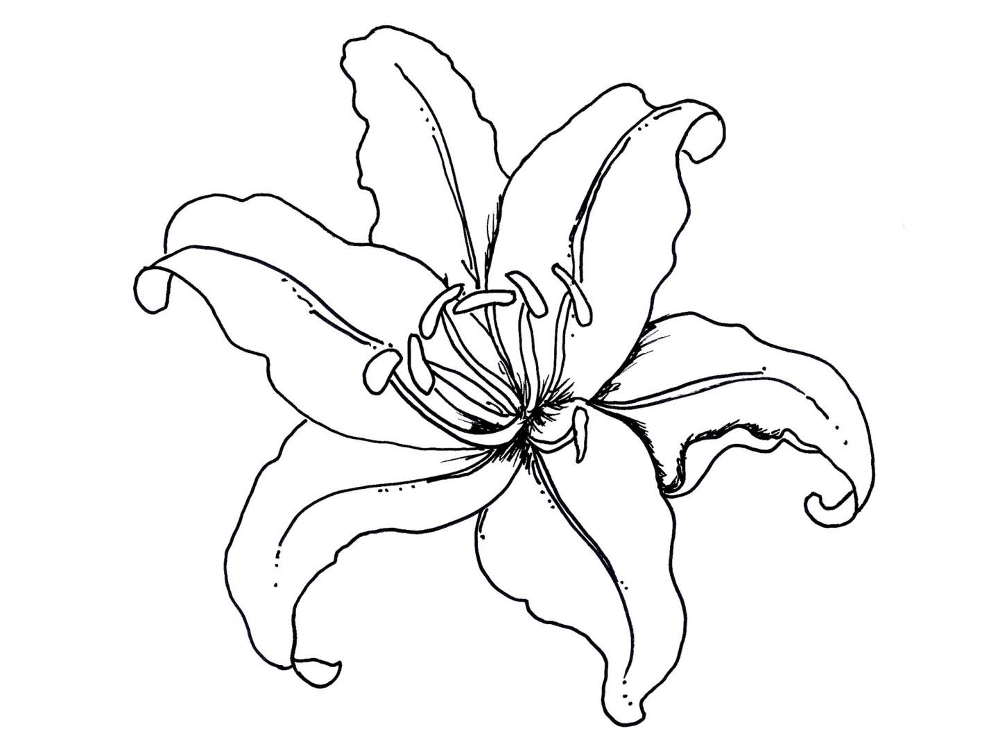 Tropical Flower Line Drawing : Plantillas de flores para colorear